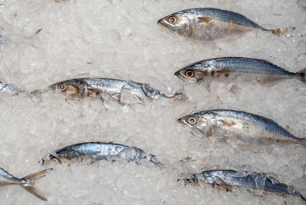 Es Flake Untuk Mengawetkan Ikan